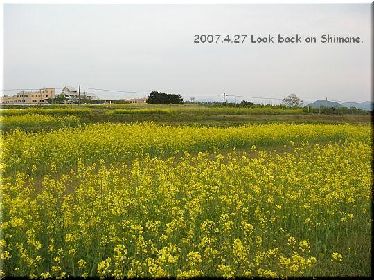 2007.4.27西伯郡伯耆町菜の花.jpg