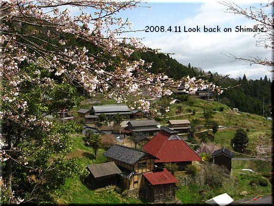 2008.04.11醍醐桜11.JPG