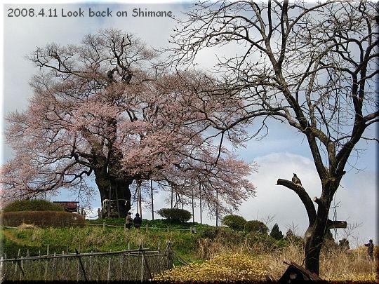2008.04.11醍醐桜3.JPG