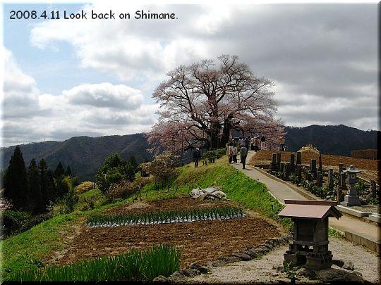 2008.04.11醍醐桜5.JPG