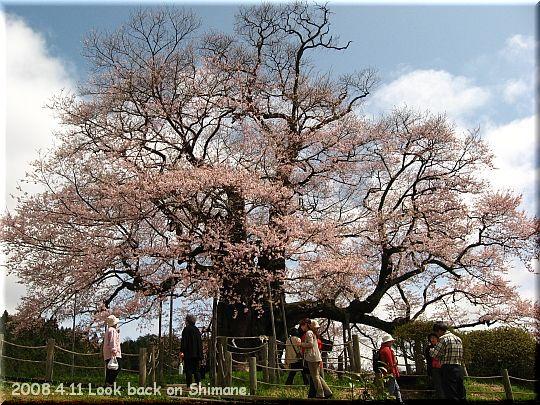 2008.04.11醍醐桜6.JPG