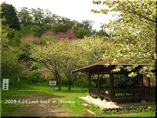 2008.04.24三刀屋城跡公園2.JPG
