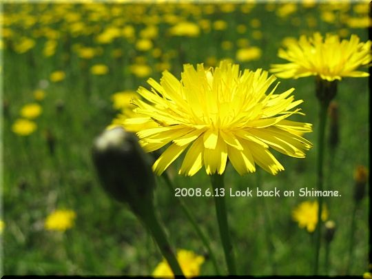 2008.06.13三瓶西の原2.JPG